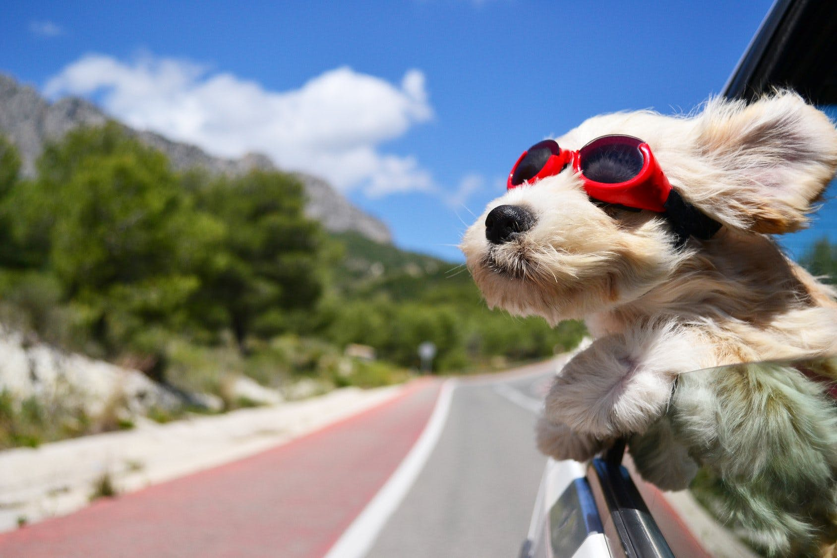 Traveling by car with your pet