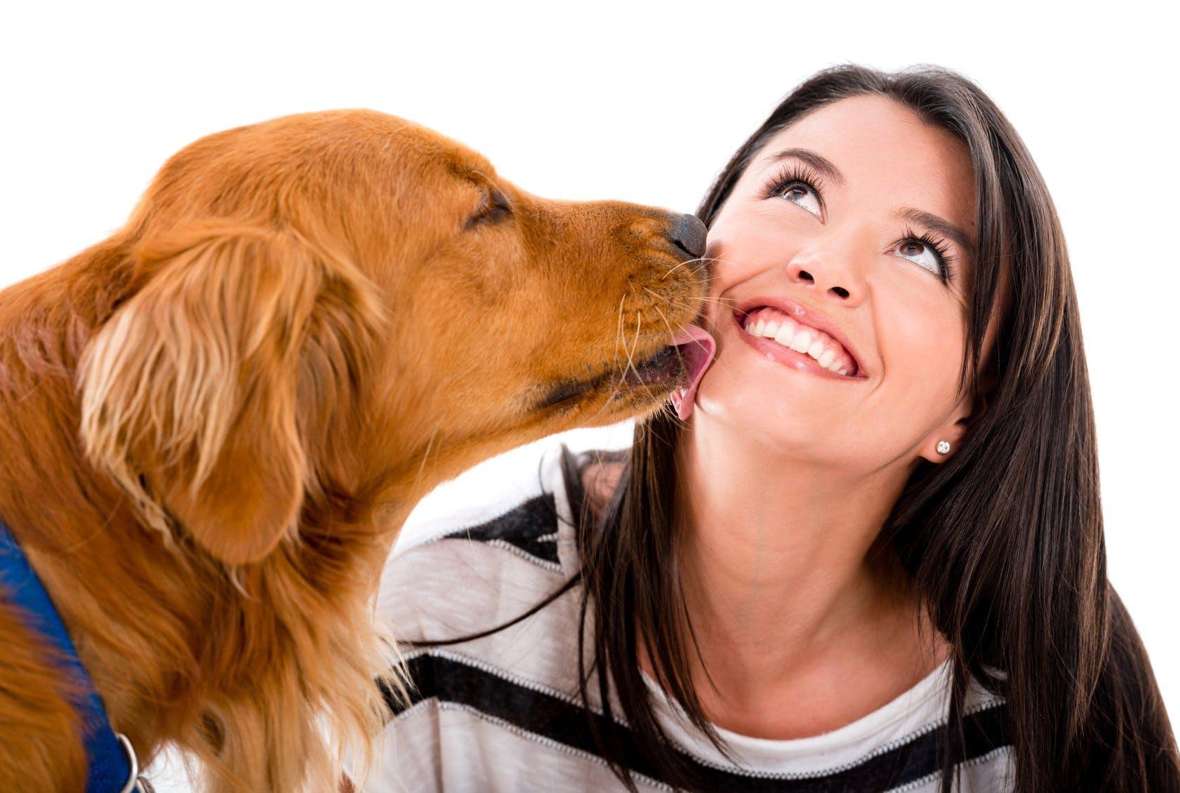 Dod hund fick kvinna vrakt