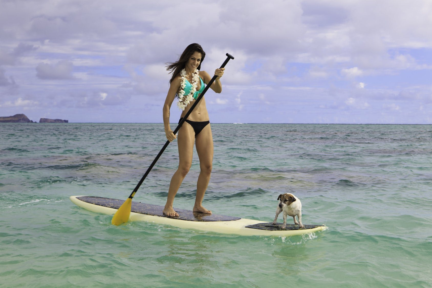 Hawaii – Visting with your pet