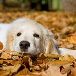 The Bedlam Farm Checklist For Prospective Dog Owners