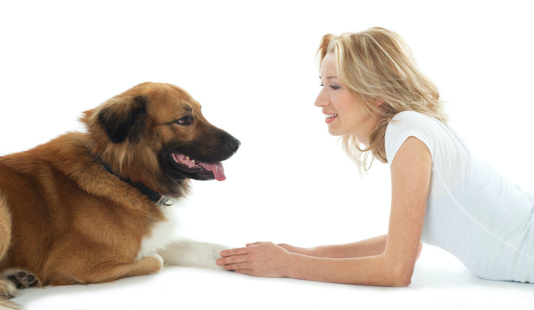 卡茨對犬 : 一個常識指南培訓和生活用狗