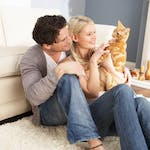 Fiif Life Lessons D'r Cats en Relationships