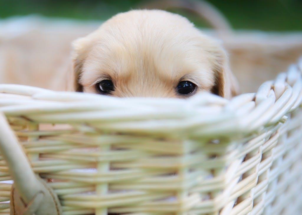 Puppy First Data