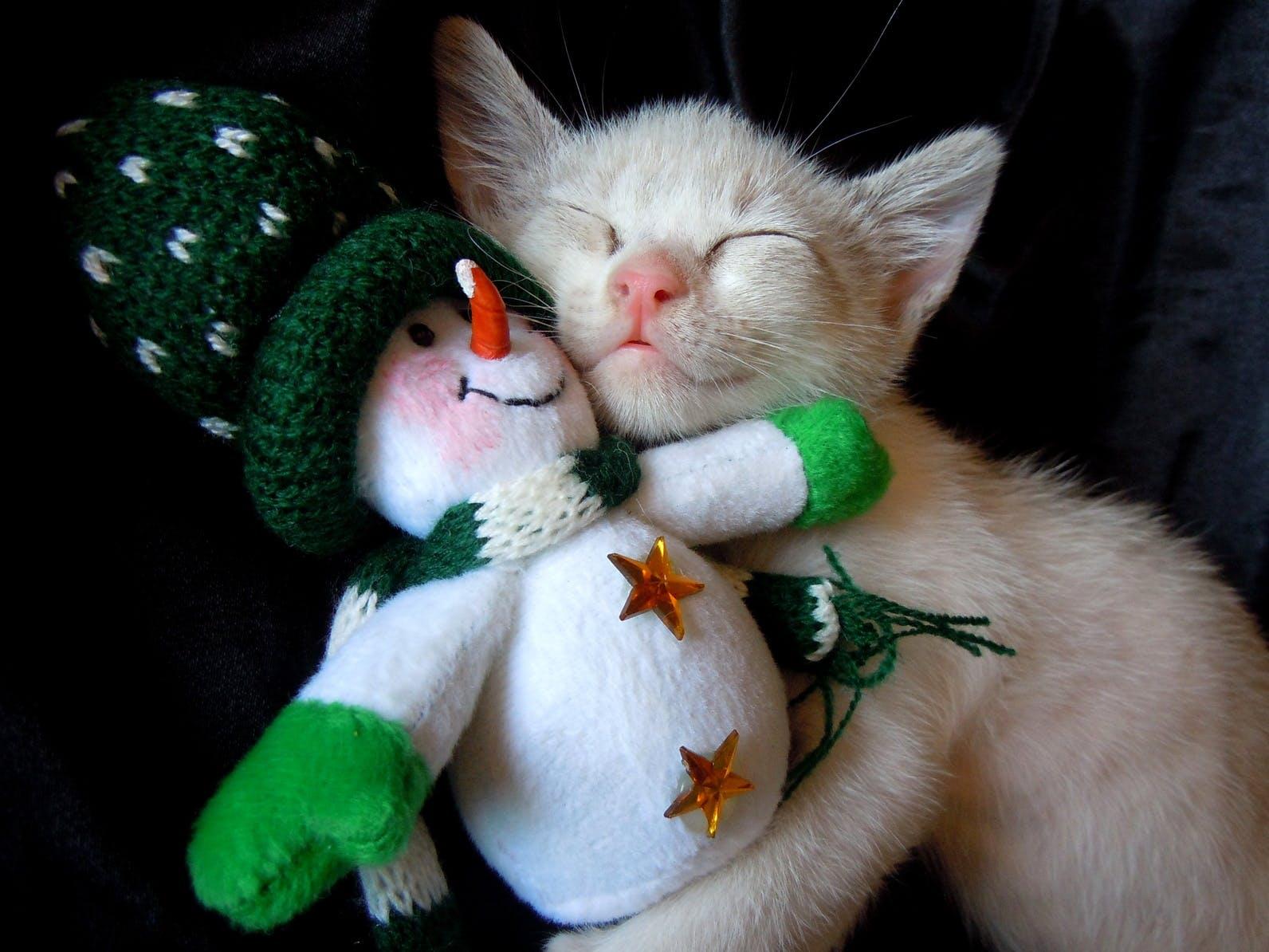 Kotě a dárky